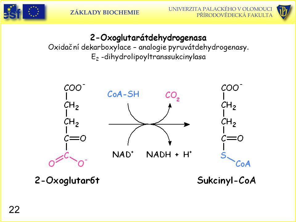 2-Oxoglutarátdehydrogenasa Oxidační dekarboxylace – analogie pyruvátdehydrogenasy. E 2 -dihydrolipoyltranssukcinylasa 22
