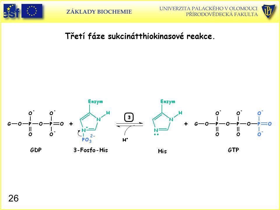 Třetí fáze sukcinátthiokinasové reakce. 26