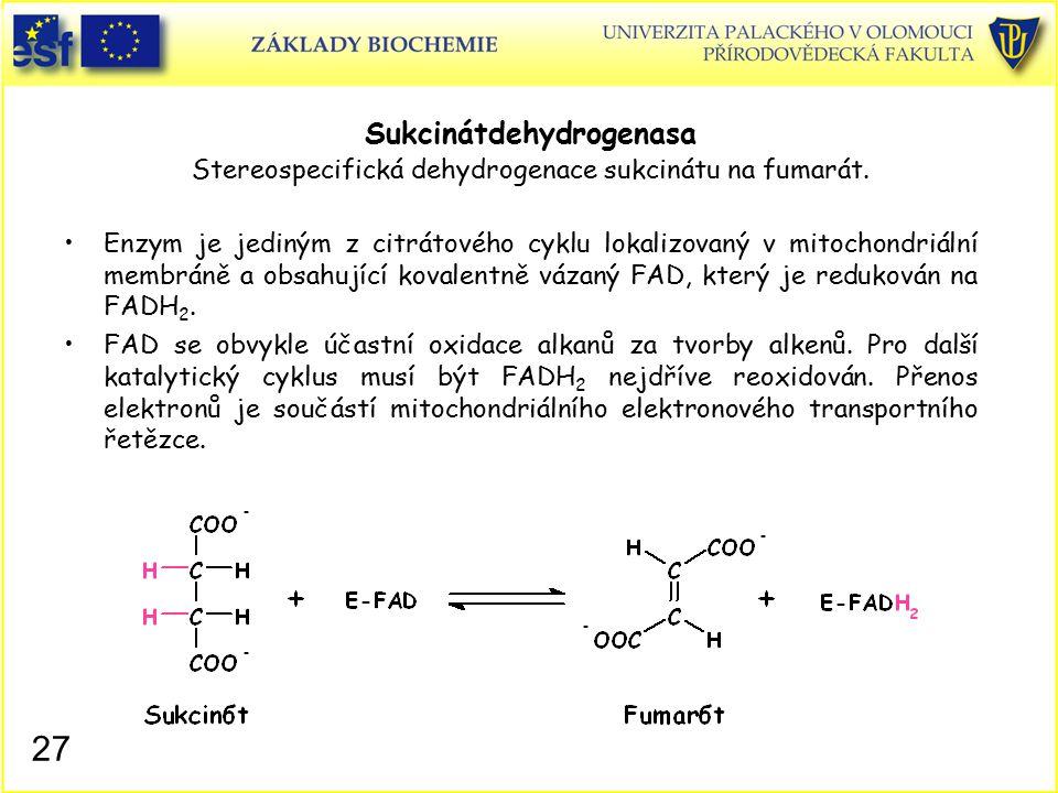 Sukcinátdehydrogenasa Stereospecifická dehydrogenace sukcinátu na fumarát. Enzym je jediným z citrátového cyklu lokalizovaný v mitochondriální membrán