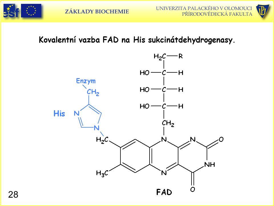 Kovalentní vazba FAD na His sukcinátdehydrogenasy. 28