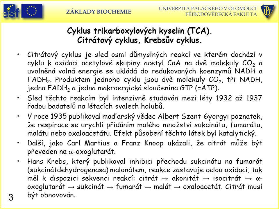 Historie objevu citrátového cyklu V roce 1937 publikovali Martius a Knoop klíčový poznatek, který Krebsovi chyběl pro spojení oxidace v citrátovém cyklu s metabolismem glukosy.