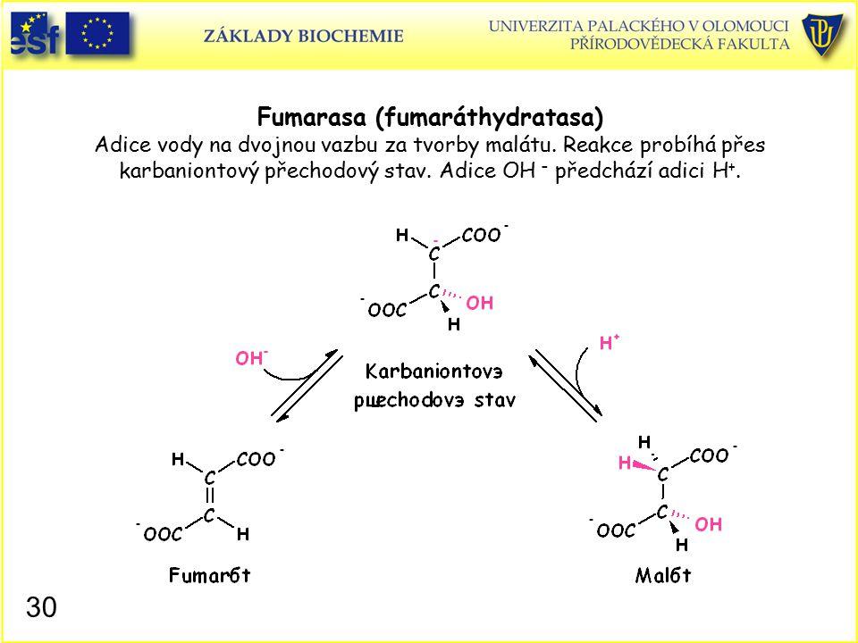 Fumarasa (fumaráthydratasa) Adice vody na dvojnou vazbu za tvorby malátu. Reakce probíhá přes karbaniontový přechodový stav. Adice OH – předchází adic