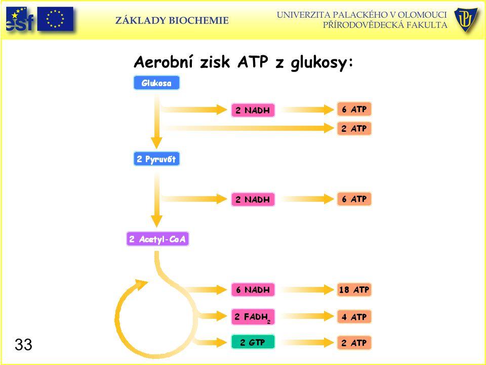 Aerobní zisk ATP z glukosy: 33