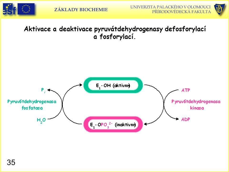 Aktivace a deaktivace pyruvátdehydrogenasy defosforylací a fosforylací. 35