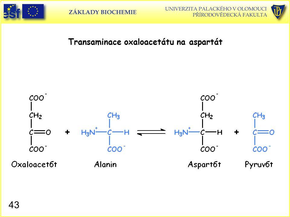 Transaminace oxaloacetátu na aspartát 43