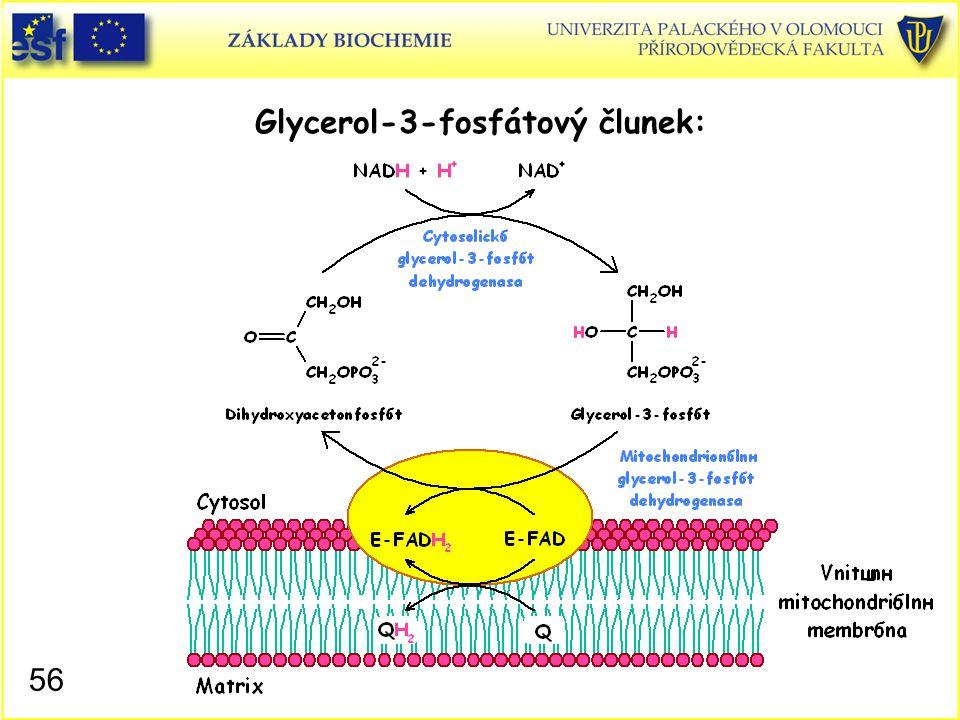 Glycerol-3-fosfátový člunek: 56