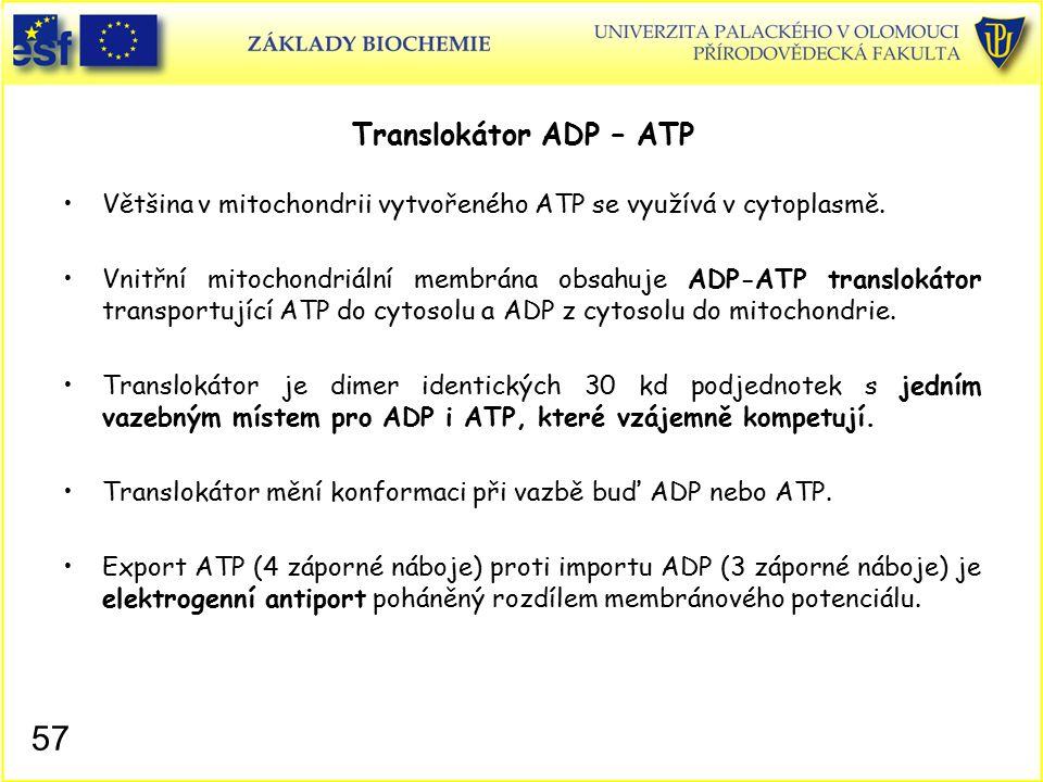 Translokátor ADP – ATP Většina v mitochondrii vytvořeného ATP se využívá v cytoplasmě. Vnitřní mitochondriální membrána obsahuje ADP-ATP translokátor