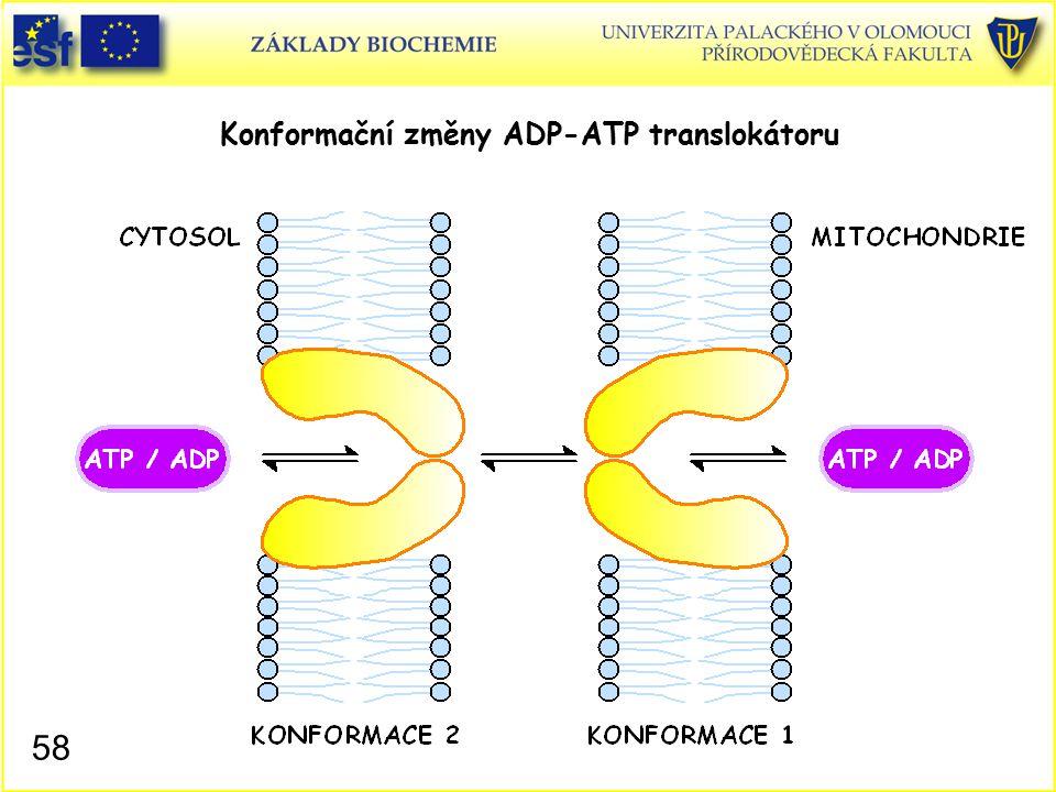 Konformační změny ADP-ATP translokátoru 58