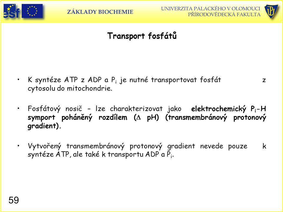 Transport fosfátů K syntéze ATP z ADP a P i je nutné transportovat fosfát z cytosolu do mitochondrie. Fosfátový nosič – lze charakterizovat jako elekt