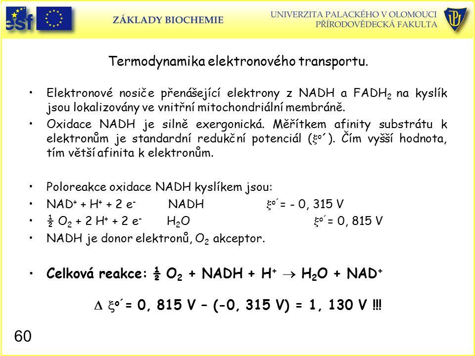 Termodynamika elektronového transportu. Elektronové nosiče přenášející elektrony z NADH a FADH 2 na kyslík jsou lokalizovány ve vnitřní mitochondriáln