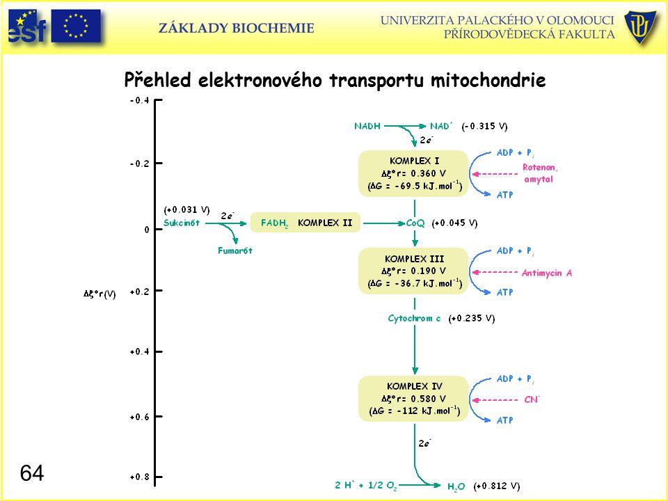 Přehled elektronového transportu mitochondrie 64