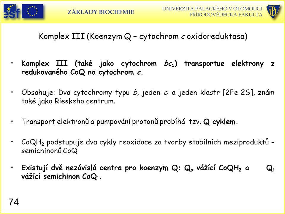 Komplex III (Koenzym Q – cytochrom c oxidoreduktasa) Komplex III (také jako cytochrom bc 1 ) transportue elektrony z redukovaného CoQ na cytochrom c.