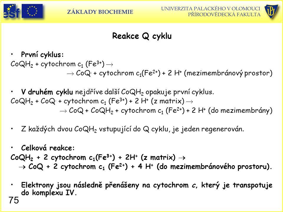 Reakce Q cyklu První cyklus: CoQH 2 + cytochrom c 1 (Fe 3+ )   CoQ. + cytochrom c 1 (Fe 2+ ) + 2 H + (mezimembránový prostor) V druhém cyklu nejdřív