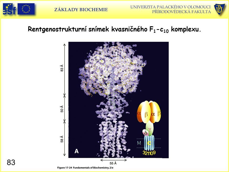 Rentgenostrukturní snímek kvasničného F 1 -c 10 komplexu. 83