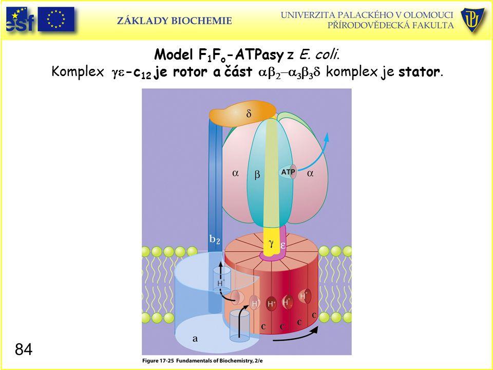 Model F 1 F o -ATPasy z E. coli. Komplex  -c 12 je rotor a část        komplex je stator. 84