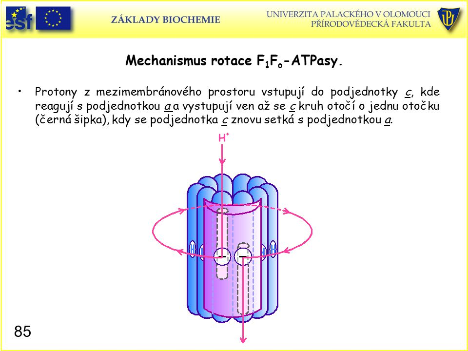 Mechanismus rotace F 1 F o -ATPasy.