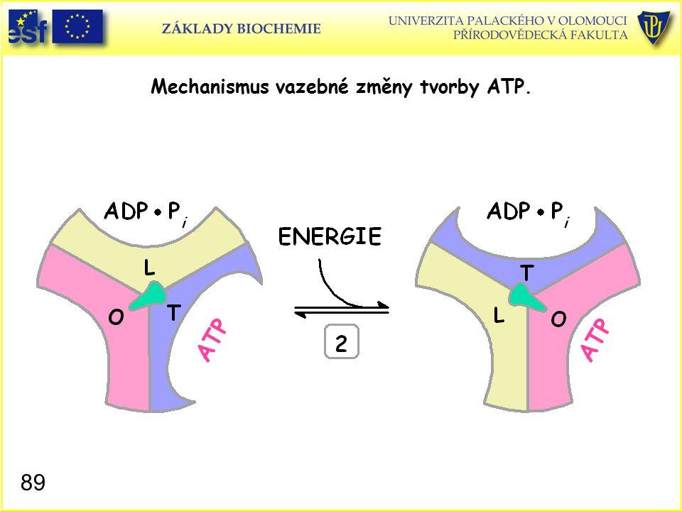 Mechanismus vazebné změny tvorby ATP. 89