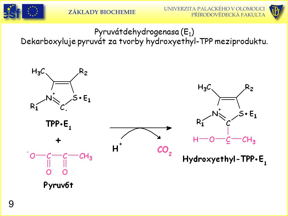 Pyruvátdehydrogenasa (E 1 ) Dekarboxyluje pyruvát za tvorby hydroxyethyl-TPP meziproduktu. 9
