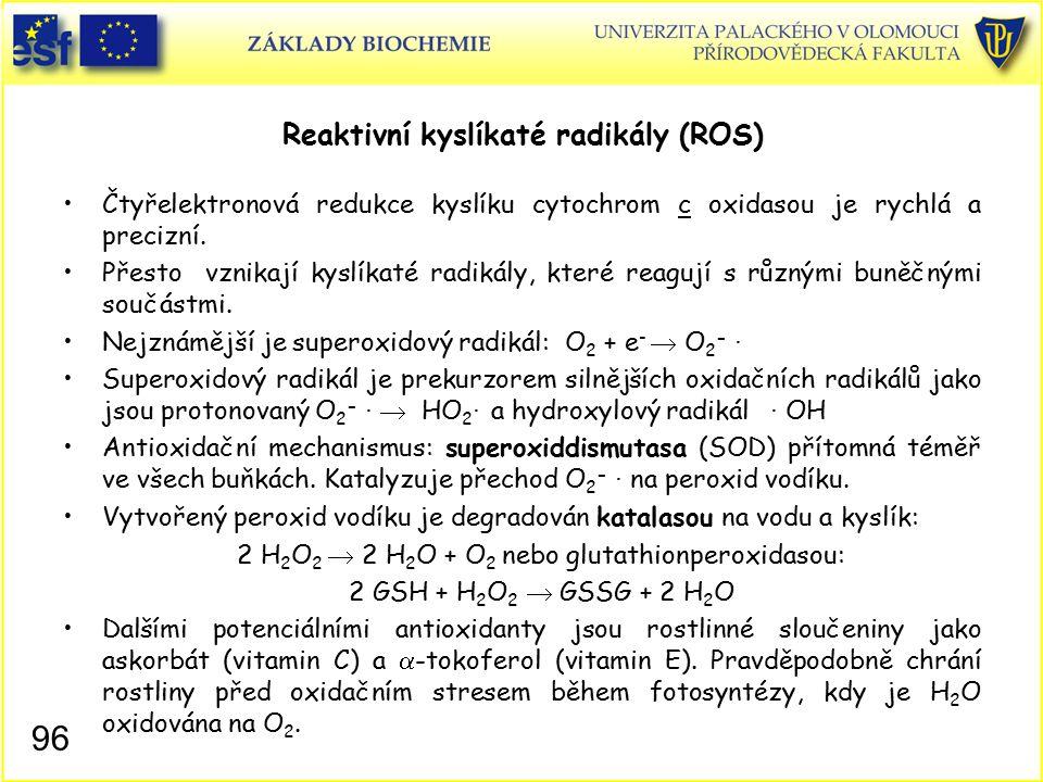 Reaktivní kyslíkaté radikály (ROS) Čtyřelektronová redukce kyslíku cytochrom c oxidasou je rychlá a precizní. Přesto vznikají kyslíkaté radikály, kter