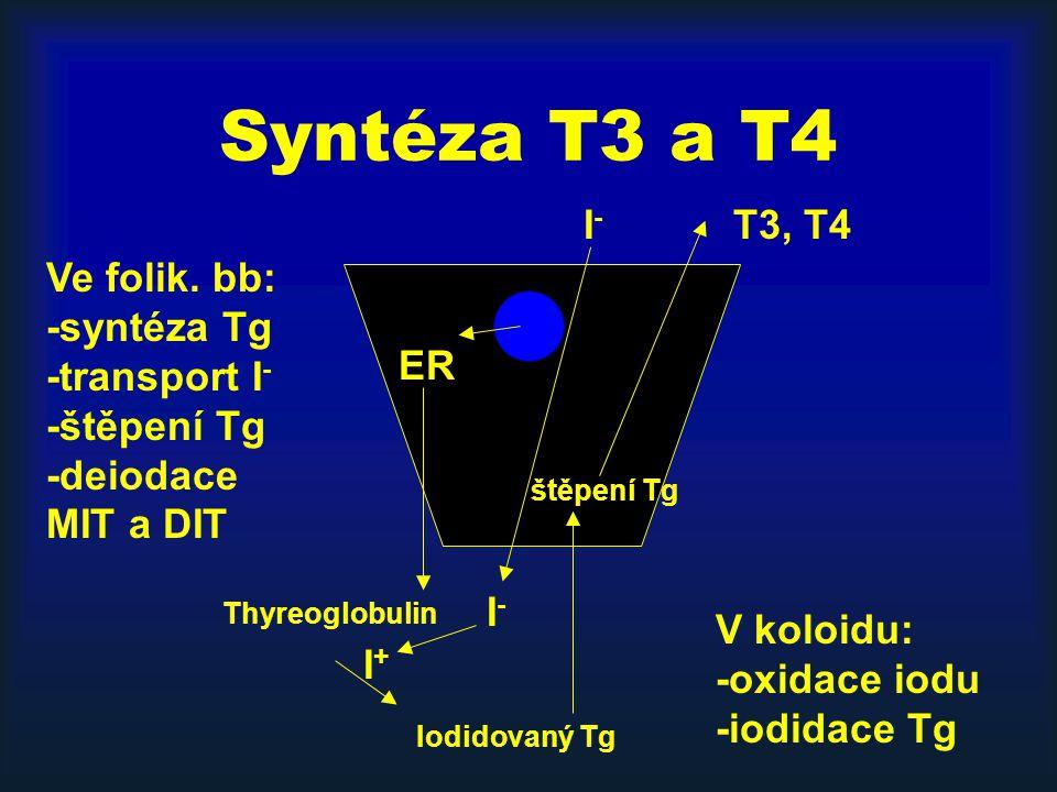 Syntéza T3 a T4 ER Thyreoglobulin Iodidovaný Tg štěpení Tg T3, T4I-I- I-I- I+I+ Ve folik. bb: -syntéza Tg -transport I - -štěpení Tg -deiodace MIT a D
