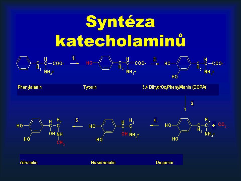 Syntéza katecholaminů