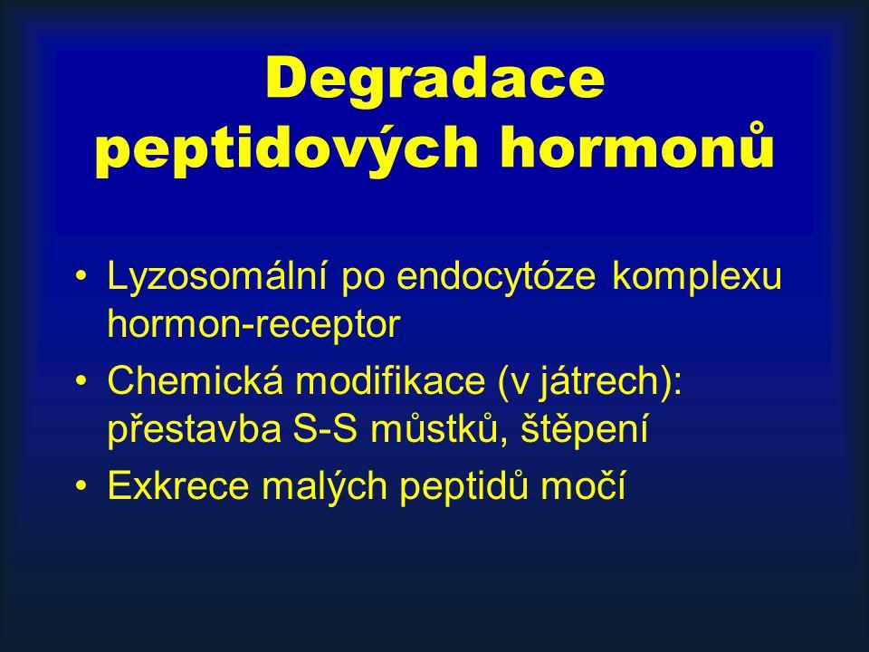 Degradace peptidových hormonů Lyzosomální po endocytóze komplexu hormon-receptor Chemická modifikace (v játrech): přestavba S-S můstků, štěpení Exkrec
