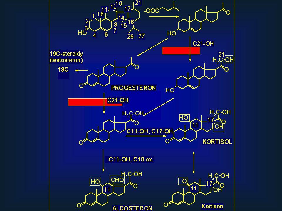 Syntéza T3 a T4 ER Thyreoglobulin Iodidovaný Tg štěpení Tg T3, T4I-I- I-I- I+I+ Ve folik.