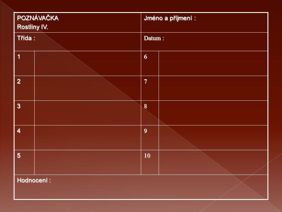 POZNÁVAČKA Rostliny IV. Jméno a příjmení : Třída : Datum : 16 27 38 49 5 10101010 Hodnocení :