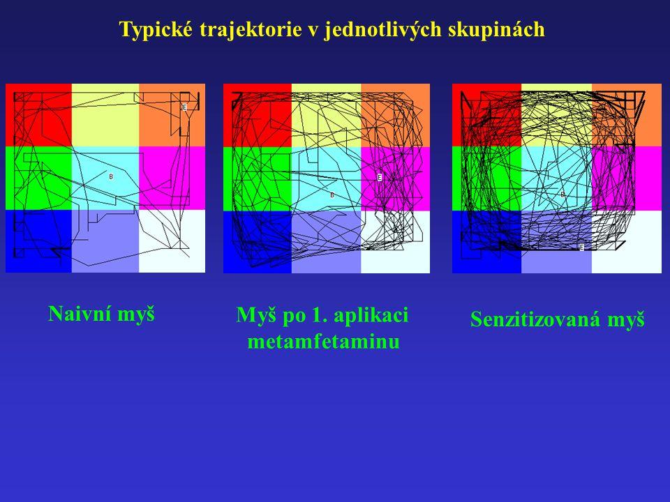 Typické trajektorie v jednotlivých skupinách Naivní myš Myš po 1.