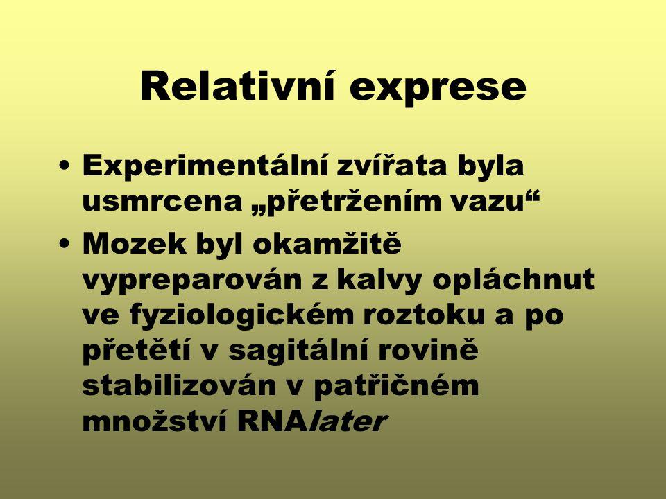 """Relativní exprese Experimentální zvířata byla usmrcena """"přetržením vazu Mozek byl okamžitě vypreparován z kalvy opláchnut ve fyziologickém roztoku a po přetětí v sagitální rovině stabilizován v patřičném množství RNAlater"""