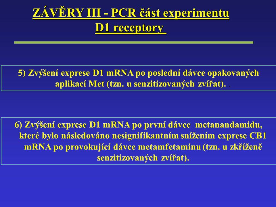ZÁVĚRY III - PCR část experimentu D1 receptory 5) Zvýšení exprese D1 mRNA po poslední dávce opakovaných aplikací Met (tzn.