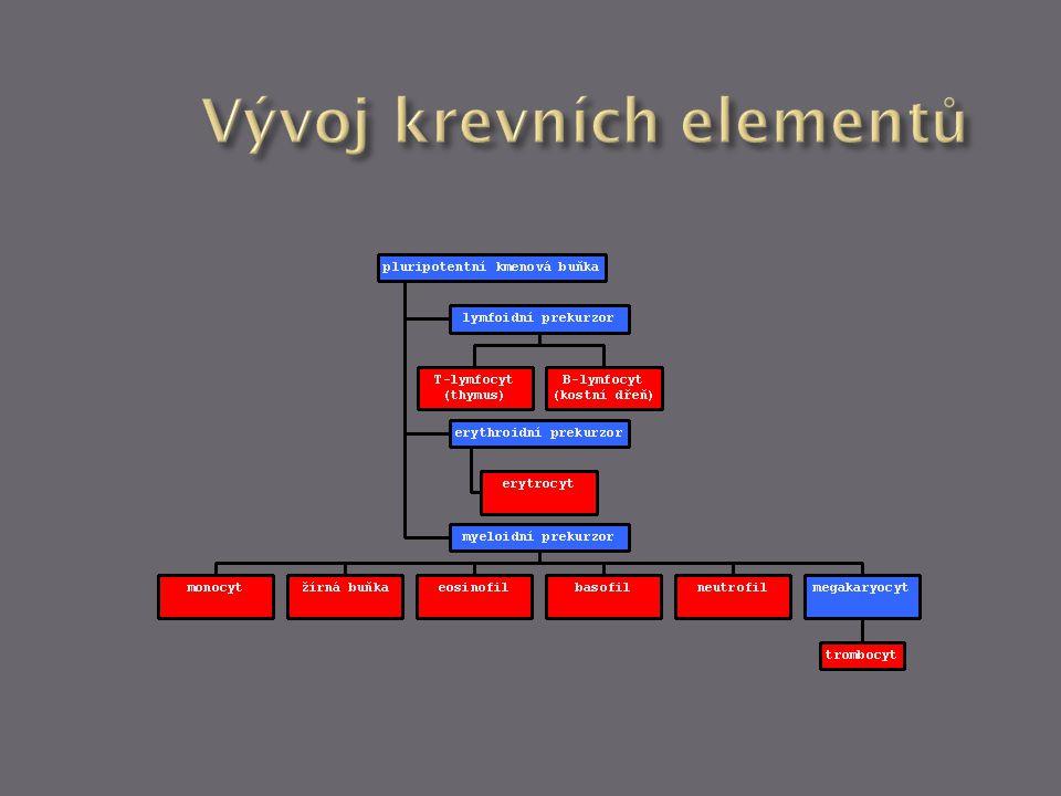 1.respirace (transport O 2 a CO ´2 ) 2. výživa (transport vstřebaných živin) 3.