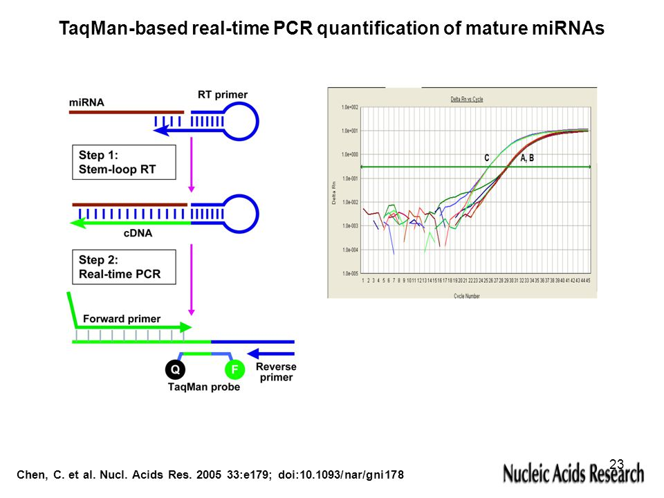 Chen, C. et al. Nucl. Acids Res. 2005 33:e179; doi:10.1093/nar/gni178 TaqMan-based real-time PCR quantification of mature miRNAs 23