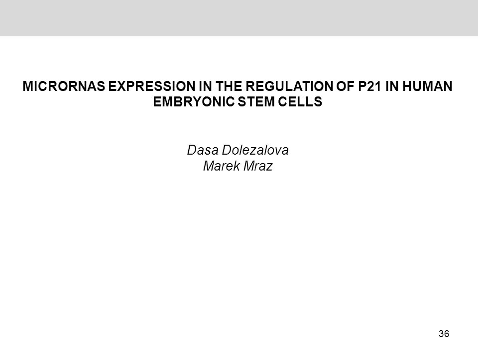 MICRORNAS EXPRESSION IN THE REGULATION OF P21 IN HUMAN EMBRYONIC STEM CELLS Dasa Dolezalova Marek Mraz 36