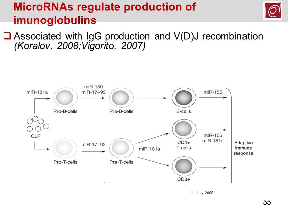  Associated with IgG production and V(D)J recombination (Koralov, 2008;Vigorito, 2007) MicroRNAs regulate production of imunoglobulins Lindsay, 2008