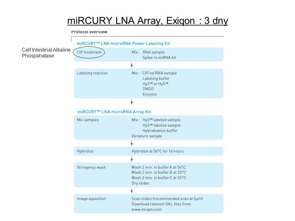 miRCURY LNA Array, Exiqon : 3 dny Calf Intestinal Alkaline Phospahatase