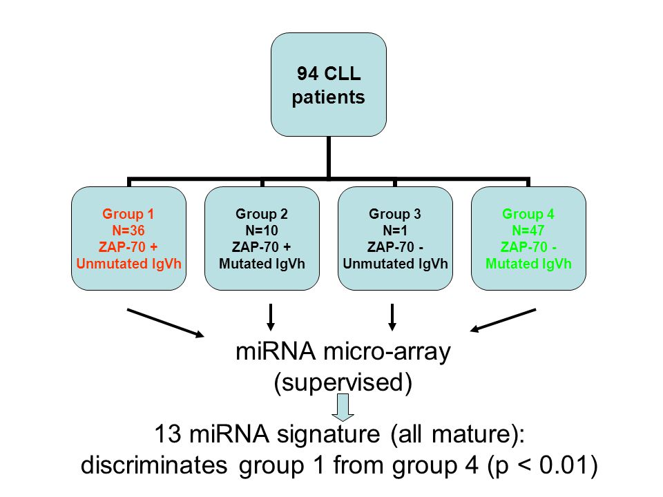 94 CLL patients Group 1 N=36 ZAP-70 + Unmutated IgVh Group 2 N=10 ZAP-70 + Mutated IgVh Group 3 N=1 ZAP-70 - Unmutated IgVh Group 4 N=47 ZAP-70 - Mutated IgVh miRNA micro-array (supervised) 13 miRNA signature (all mature): discriminates group 1 from group 4 (p < 0.01)