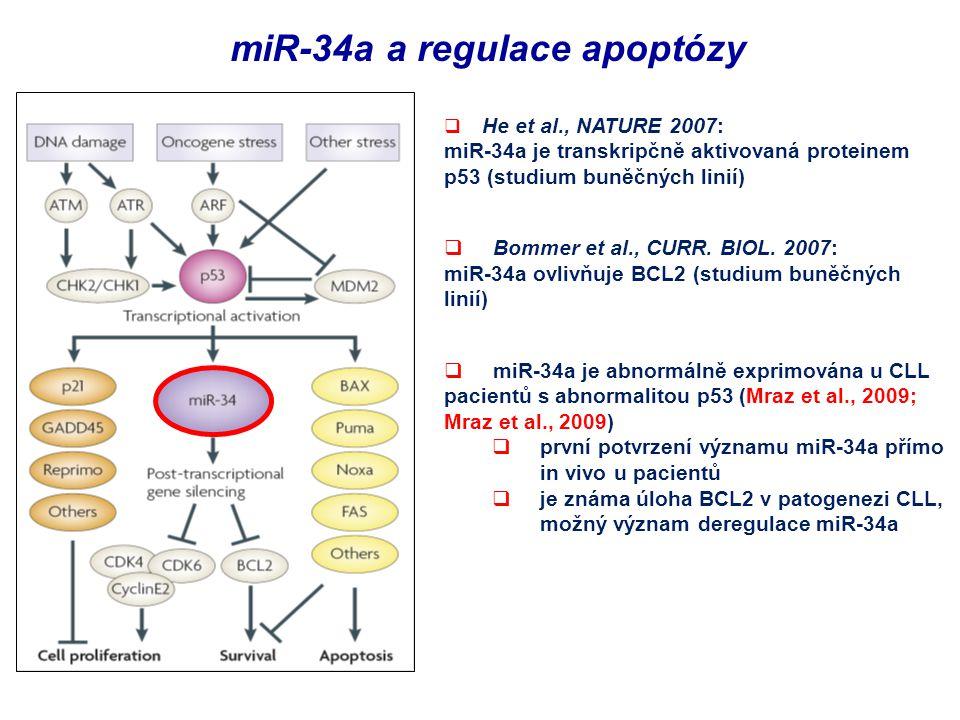 miR-34a a regulace apoptózy  He et al., NATURE 2007: miR-34a je transkripčně aktivovaná proteinem p53 (studium buněčných linií)  Bommer et al., CUR