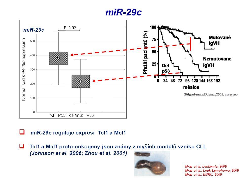 miR-29c  miR-29c reguluje expresi Tcl1 a Mcl1  Tcl1 a Mcl1 proto-onkogeny jsou známy z myších modelů vzniku CLL (Johnson et al. 2006; Zhou et al. 20