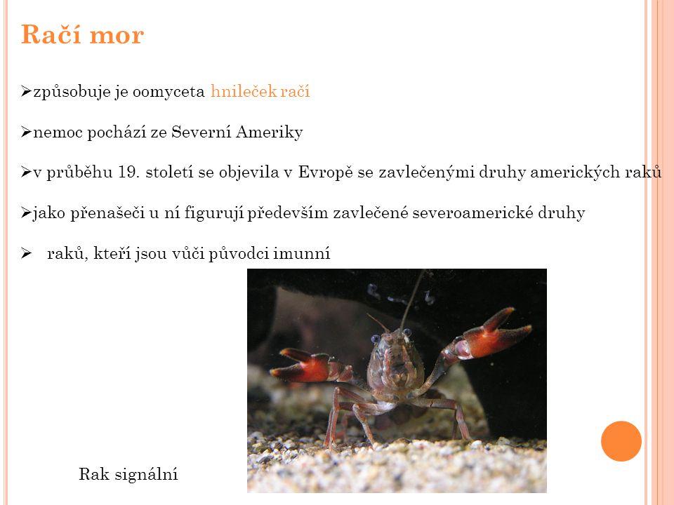 Račí mor  způsobuje je oomyceta hnileček račí  nemoc pochází ze Severní Ameriky  v průběhu 19.
