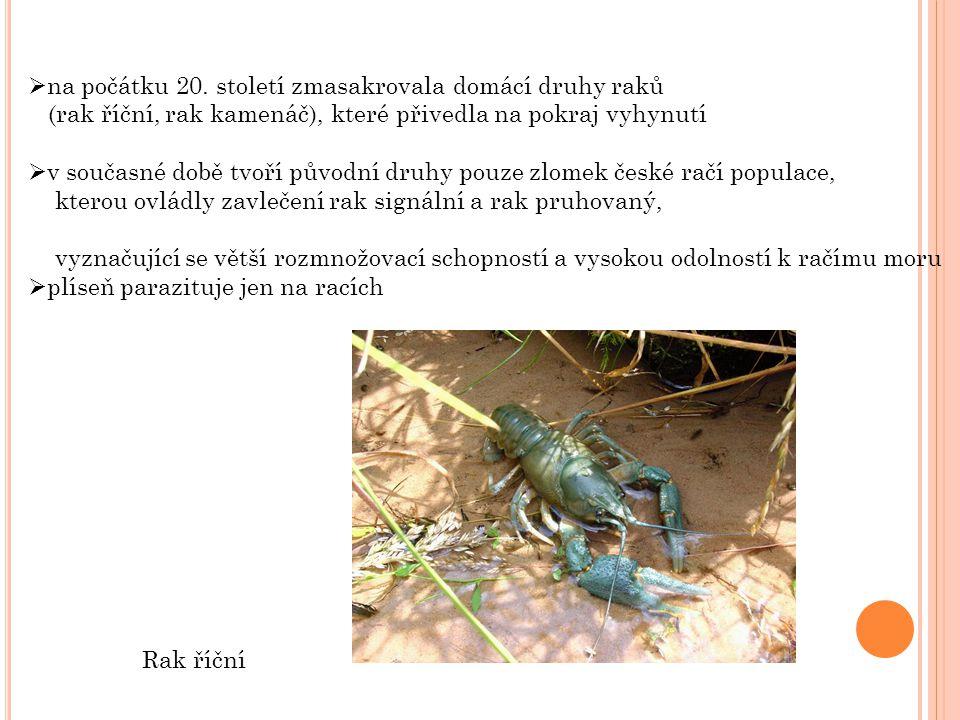  Water mold Mizukabi colony.jpg.In: Wikipedia: the free encyclopedia [online].