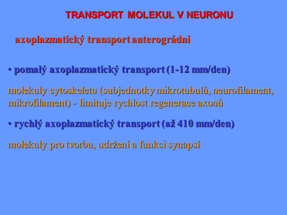 TRANSPORT MOLEKUL V NEURONU axoplazmatický transport anterográdní molekuly pro tvorbu, udržení a funkci synapsí pomalý axoplazmatický transport (1-12