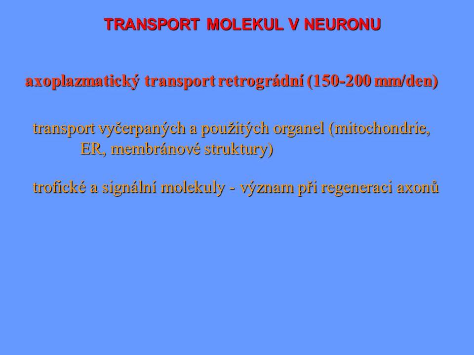 TRANSPORT MOLEKUL V NEURONU axoplazmatický transport retrográdní (150-200 mm/den) transport vyčerpaných a použitých organel (mitochondrie, ER, membrán