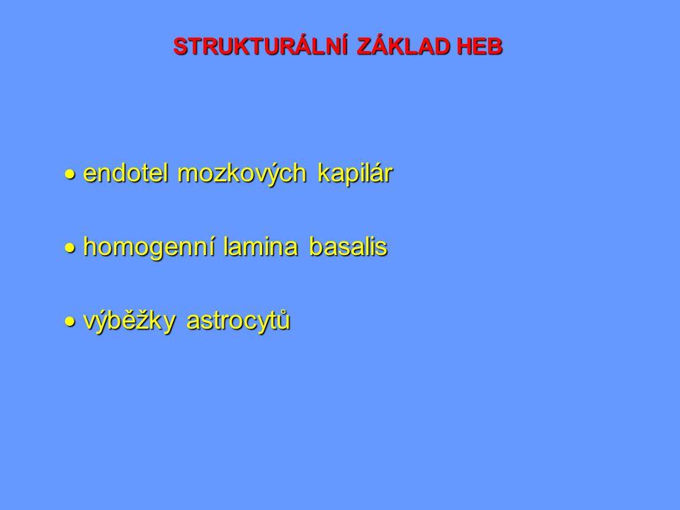 STRUKTURÁLNÍ ZÁKLAD HEB  endotel mozkových kapilár  homogenní lamina basalis  výběžky astrocytů