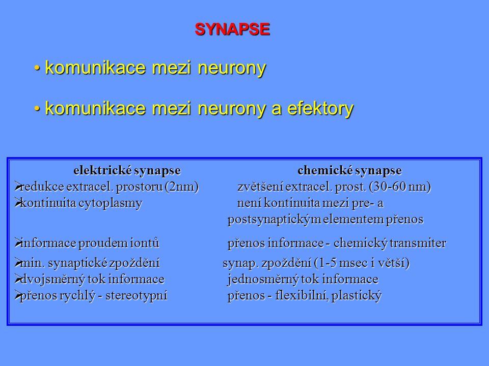 SYNAPSE komunikace mezi neurony komunikace mezi neurony komunikace mezi neurony a efektory komunikace mezi neurony a efektory elektrické synapsechemic
