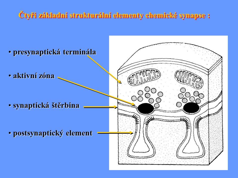 Čtyři základní strukturální elementy chemické synapse : presynaptická terminála presynaptická terminála aktivní zóna aktivní zóna synaptická štěrbina