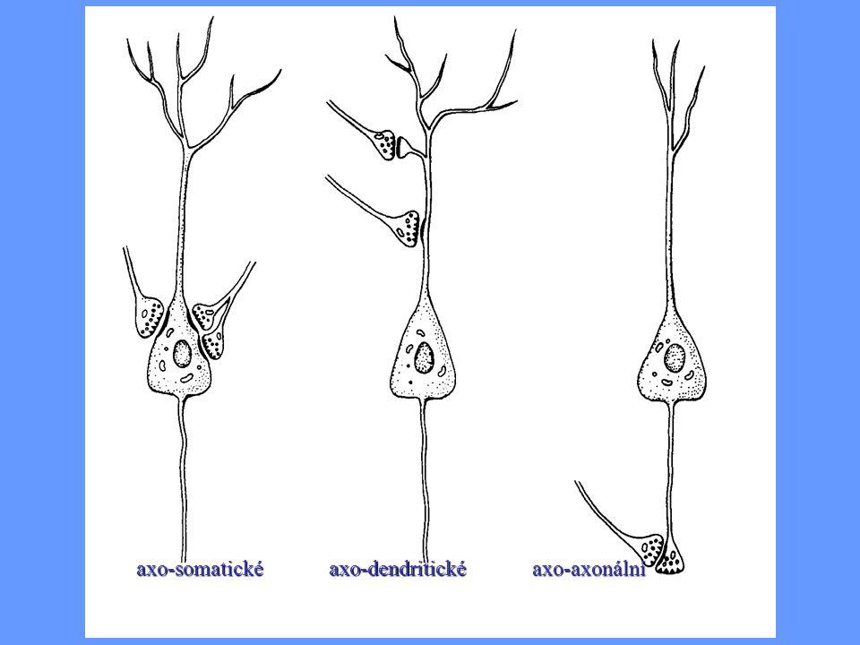 axo-dendritickéaxo-somatickéaxo-axonální