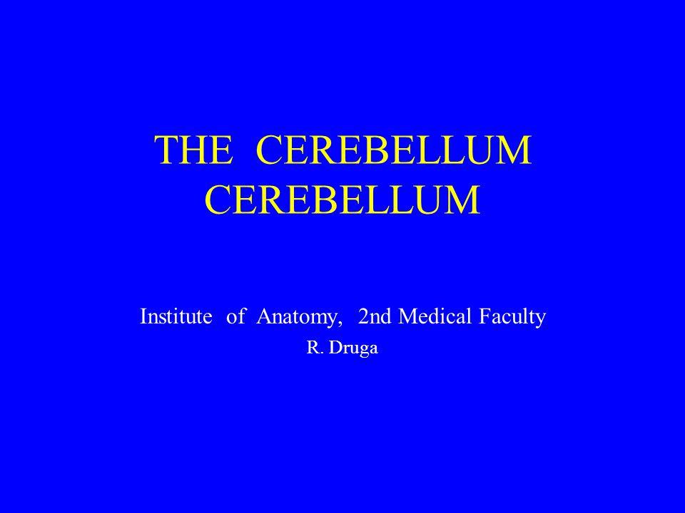 THE CEREBELLUM CEREBELLUM Institute of Anatomy, 2nd Medical Faculty R. Druga