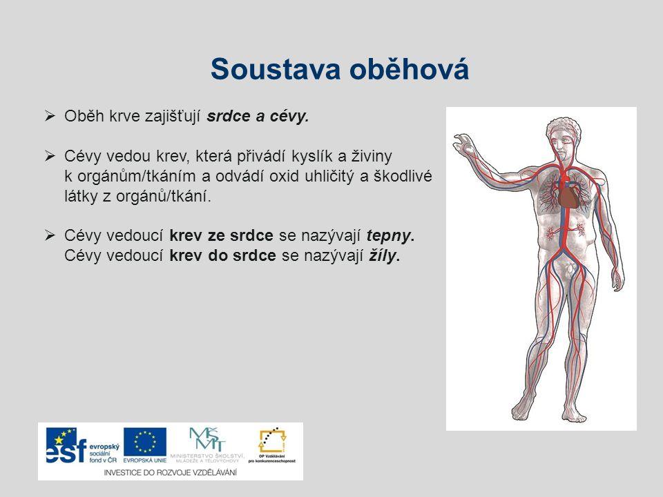 Soustava oběhová  Oběh krve zajišťují srdce a cévy.  Cévy vedou krev, která přivádí kyslík a živiny k orgánům/tkáním a odvádí oxid uhličitý a škodli