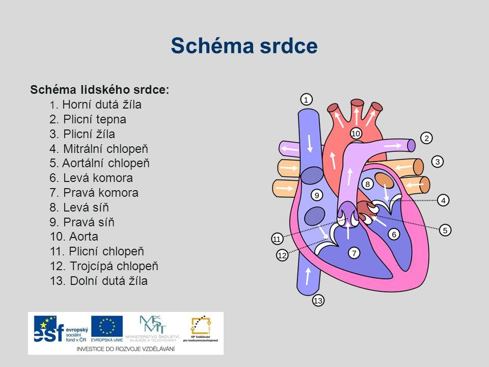 Činnost srdce - systola Systola:  koordinovaný stah srdeční svaloviny síní nebo komor, při které je krev ze síní vypuzena do komor  aby nedocházelo ke zpětnému toku krve z komor do síní, je mezi pravou síní a komorou trojcípá chlopeň a mezi levou síní a komorou chlopeň dvojcípá